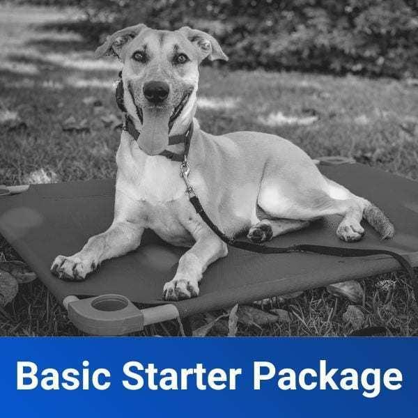 basic obedience starter