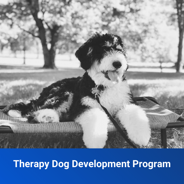 Therapy Dog Development